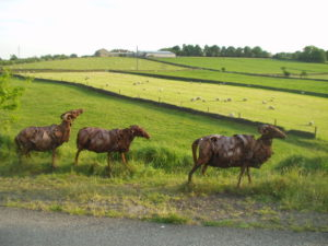 Spen Valley sheep scultpures
